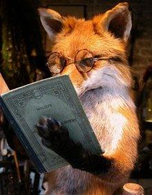 arcal janacek petite renarde rusee le renard à lunettes