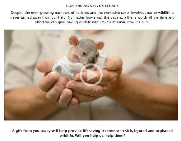 sauvez-les-koalas-australie-classiquenews