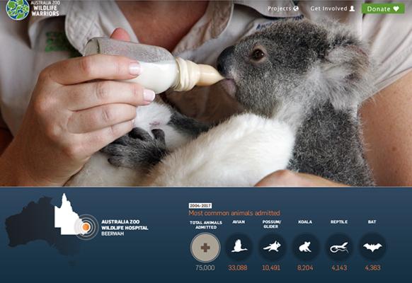 sauvons-les-koalas-en-australie-classiquenews-une-extinction-annoncee-classiquenews