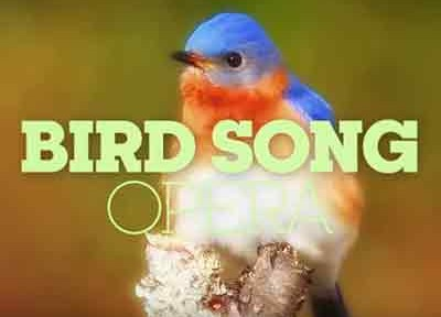 bird-song-opera-shakedup-music-bird-opera-classiquenews-clip-confinement-critique-opera