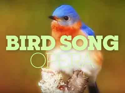 bird-song-opera-shakedup-music-bird-opera-classiquenews-clip-confinement-critique-opera